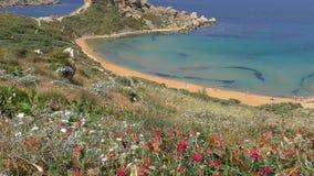 Flores salvajes sobre el mar de oro de la playa y del azul almacen de video