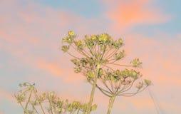 Flores salvajes teniendo en cuenta salida del sol Imagen de archivo libre de regalías