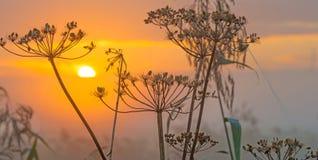 Flores salvajes teniendo en cuenta salida del sol Imágenes de archivo libres de regalías