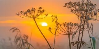 Flores salvajes teniendo en cuenta salida del sol Fotos de archivo