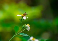 Flores salvajes y abeja Fotografía de archivo