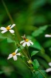 Flores salvajes y abeja Imágenes de archivo libres de regalías