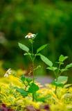 Flores salvajes y abeja Foto de archivo libre de regalías