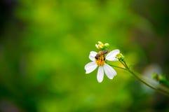 Flores salvajes y abeja Imagenes de archivo