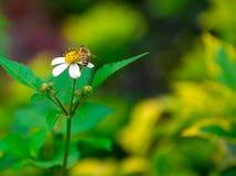 Flores salvajes y abeja Foto de archivo