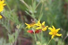 Flores salvajes y abeja Fotos de archivo