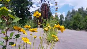 Flores salvajes y abeja de Chernóbil Pripyat en parque de atracciones almacen de metraje de vídeo