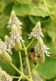 Flores salvajes y abeja de la miel con el fondo verde Imagen de archivo