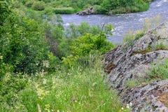 Flores salvajes y cantos rodados musgo-cubiertos cerca del río foto de archivo