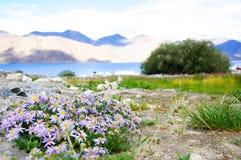 Flores salvajes y cordillera en el fondo Fotografía de archivo