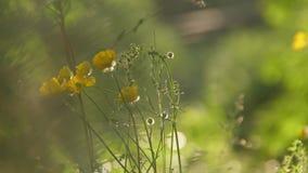 Flores salvajes y plantas Flores salvajes Flores coloridas en el campo Los Wildflowers entre hierba y flores salvajes se cierran  almacen de video