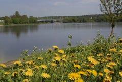 Flores salvajes y río Imagen de archivo libre de regalías