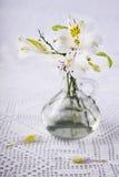 Flores sarapintados em uma garrafa Fotos de Stock Royalty Free
