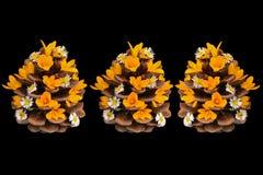 Flores sazonais da mola e o poder criativo da natureza Fotos de Stock