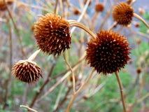 Flores secadas Imagenes de archivo