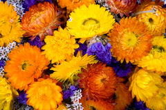 Flores secadas Imágenes de archivo libres de regalías