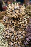 Flores secadas. fotografia de stock royalty free