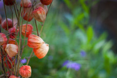 Flores secadas Foto de archivo libre de regalías
