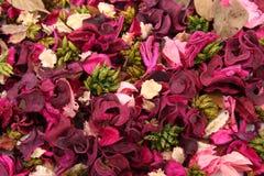 Flores secadas imagem de stock