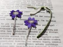 Flores secadas Fotos de Stock Royalty Free
