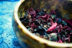 Flores secadas coloridas Foto de archivo libre de regalías