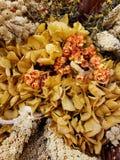Flores secadas coloridas fundo e texturas fotografia de stock