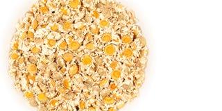Flores secadas da camomila Imagem de Stock