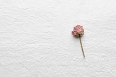 Flores secadas das rosas em um Livro Branco Cor-de-rosa amarelo Fotos de Stock Royalty Free