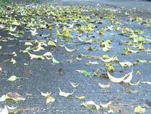 Flores secadas de la caída de las hojas en el piso fotografía de archivo