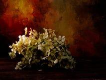 Flores secadas de la hortensia dadas el tratamiento filtrado artístico Imagenes de archivo