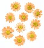 Flores secadas de la prensa Imagen de archivo