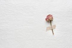 Flores secadas de rosas en un Libro Blanco Color de rosa amarillo Fotografía de archivo libre de regalías