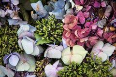 Flores secadas decorativas Fotos de Stock