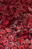 Flores secadas do hibiscus Fotos de Stock