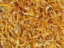Flores secadas do Marigold Fotografia de Stock Royalty Free