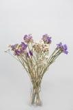 Flores secadas em um vaso Foto de Stock Royalty Free