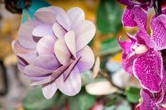 Flores secadas en el primero plano, ramos de flores secadas, centro de flores Fotos de archivo