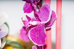Flores secadas en el primero plano, ramos de flores secadas, centro de flores Imagenes de archivo