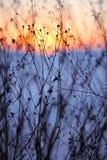 Flores secadas en una puesta del sol del fondo Imágenes de archivo libres de regalías
