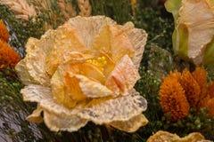 Flores secadas no primeiro plano, ramalhetes de flores secadas, arranjo de flor Fotografia de Stock