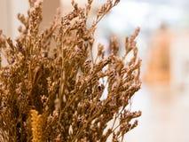 Flores secadas usadas na decoração home no bulbo do bokeh atrás do s imagens de stock royalty free