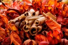 Flores secadas y corteza anaranjada aromática Imagen de archivo