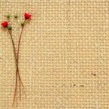 Flores secas Imagem de Stock