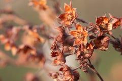 Flores secas Imágenes de archivo libres de regalías
