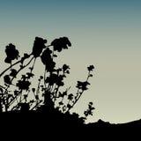 Flores secas Imagenes de archivo