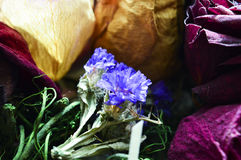 Flores secas Fotos de Stock