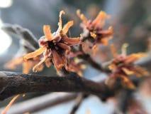 Flores secas foto de archivo libre de regalías