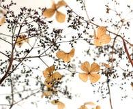 Flores secas fotos de archivo