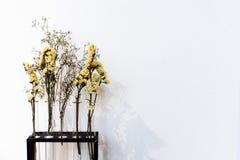 Flores secas amarillas en un fondo blanco foto de archivo