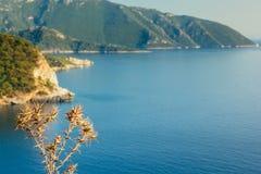 Flores secas do espinho com mar de turquesa e montanhas no backgr imagens de stock
